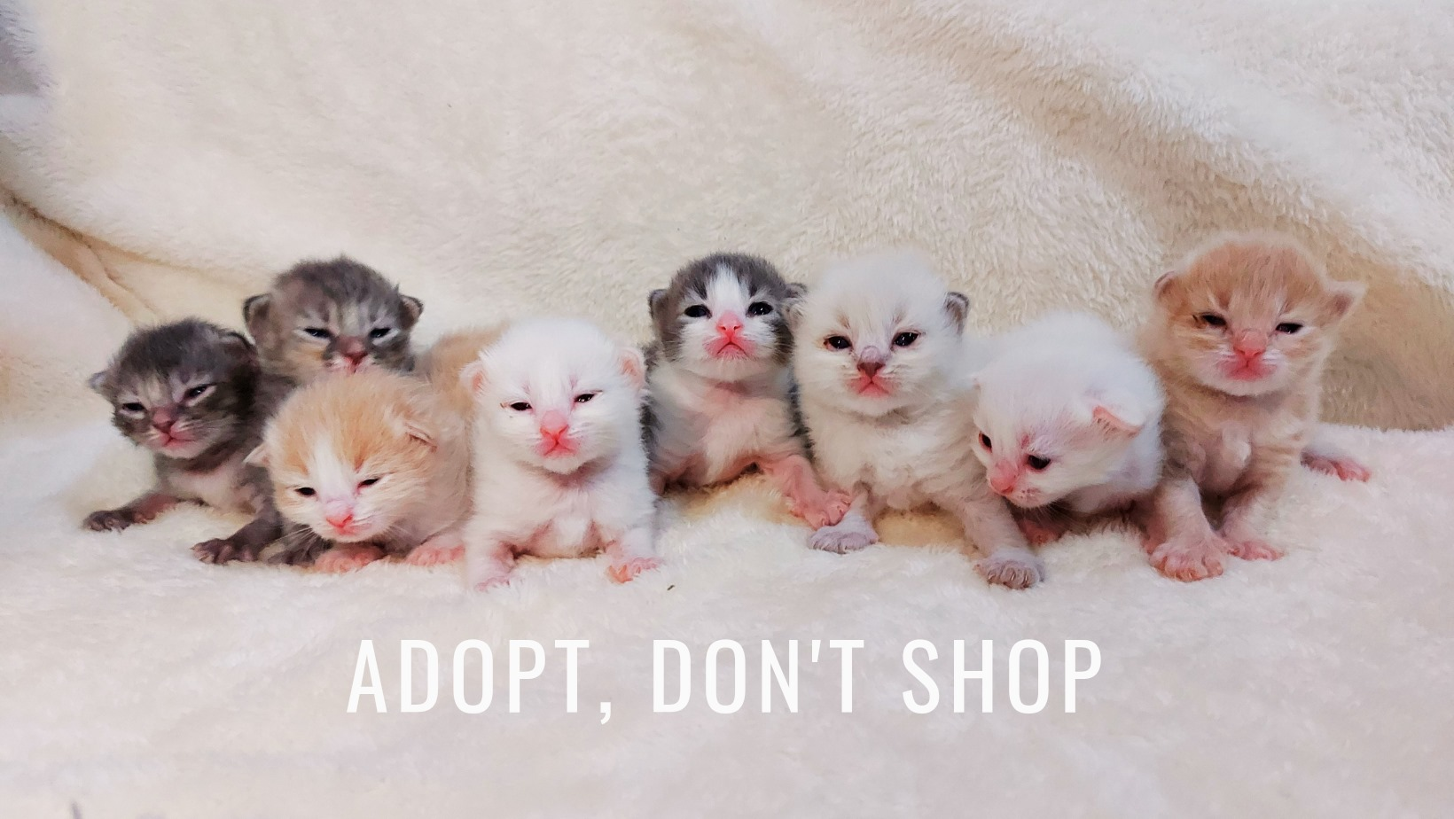 newborn kittens in Adopt Don't Shop banner